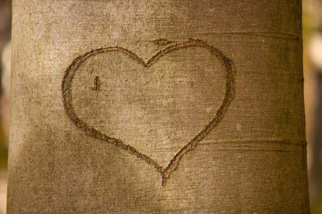 hati di pokok