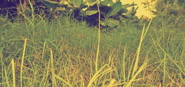 Kebun