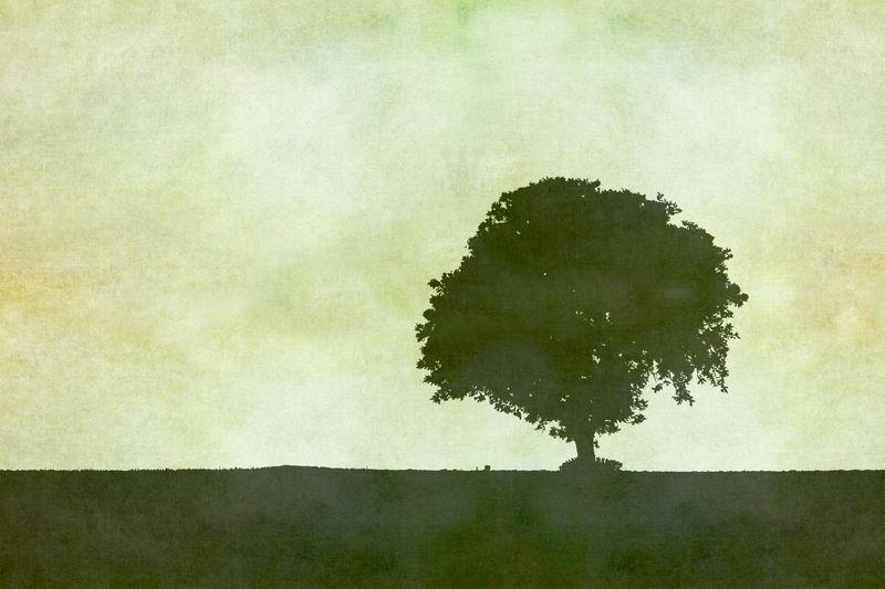 Pokok Hijau